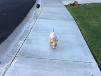 こだわりチーちゃんのお散歩 - ちょっと田舎暮しCalifornia
