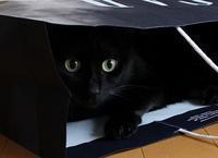 8月突入 - 黒猫瓦版