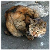 地域の猫たち、動物たち ワライカワセミまでも(追記;愛宕の白い猫)) - nazunaニッキ