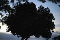 夕方の散歩(5cut) -     ~風に乗って~    Present