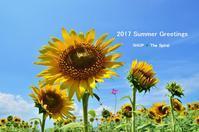 """Summer Greetings。。。~花の海の向日葵2017...8/1tue"" - SHOP ◆ The Spiralという館~カフェとインポート雑貨のある次世代型セレクトショップ~"