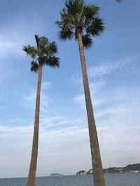8月スタートです。 - パームツリー越しにgood morning        アロマであなたの今に寄り添うブログ