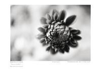 Piece of memory 092 - Shou's portfolio