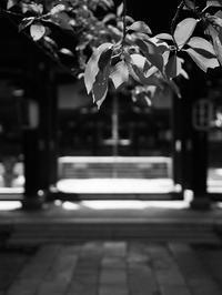 夏の参道 - 節操のない写真館