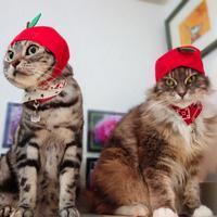 ねこフルーツちゃんになったにゃ♪ - 愛しき猫にゃん♪