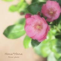 *8月* - HANA*HANA