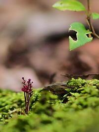 湿原にて(1)・・8月初旬に - 野路の花散策