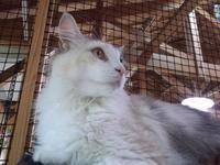 フォークナー「八月の光」 - シェークスピアの猫