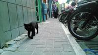 モルディブ猫歩き - モルディブをお得に賢く旅する!ローカル島現地情報発信ブログ