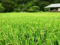 静かな雨 - 千葉県いすみ環境と文化のさとセンター