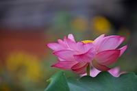 花より果托・・・続偏 - 四季の予感