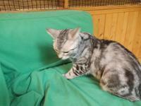 G=マルケス「ミセス・フォーブスの幸福な夏」 - ネコと文学と猫ブンガク