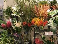 トロピカルフェア - ~ Flower Shop D.STYLE ~ (新所沢パルコ・Let's館1F)