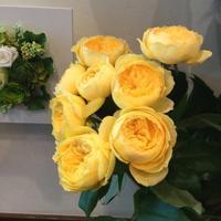 今日のおすすめ - 花だより 海浜幕張駅 花屋 テーブルコサージュ・ラボ~フラワーショップ~
