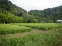 涼しめの8月のはじめ - 千葉県いすみ環境と文化のさとセンター