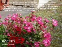 好きと言おう - 花の咲み、花のうた、きらめく地上 ―― photo&poem gallery kannon花音