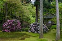 石楠花咲く三千院 - 花景色-K.W.C. PhotoBlog
