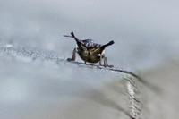 カメムシの幼虫 たち - 野山の住認たちⅡ