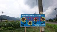 国道沿いひまわり畑🌻ひまわりの花咲き始めました(^^♪ - 付知町観光協会情報
