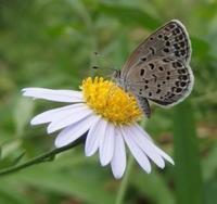 #チョウ 『花 と 蝶』 - 自然感察 *Nature * feeling*
