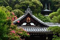 永観堂・夏の花は百日紅 - ちょっとそこまで