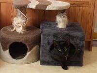 誰も見向きもしなかったところに、 - 『ココんちの(3+1)+1+1猫と一犬のたわごと』 (2+1)+1+1 Pitchouns et 2 Pitchounettes