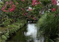 ☆ 地蔵川の梅花藻 ☆ - 気ままなフォトライフ