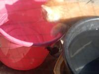 気を取り直して金魚を編む - 愛犬家の猫日記