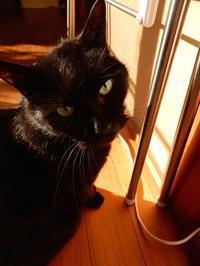くまちゃん印のヒノキ台通販スタート - ご機嫌元氣 猫の森公式ブログ