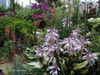 知人のお庭でバーベキュー - Photo Album