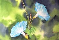 夏の花 (朝顔)その2 - ポッと出っスけど杉山ひとみ/水彩画ブログ