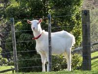 今日の子馬とツインスター - いい旅・夢Kiwi スカイキウィの夢日記