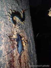 夜の樹液巡り ~ 20170716 - 神は細部に宿る