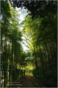 竹林の小路 - It's only photo