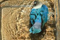 水浴びB.Bの記録 → (だんだん盛り上がるよ~♪・8月2日) そして水浴び記念日 - FUNKY'S BLUE SKY