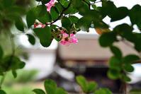 京都御苑の百日紅 - ちょっとそこまで