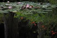 大阪市立大学理学部附属植物園 7/16 - 写真部