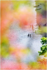 金尾山のツツジ(1) - ぶらぶらデジカメ写真 by はる