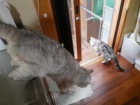 モン様リクエスト - ご機嫌元氣 猫の森公式ブログ