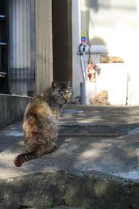 新宿坂道サンポ。7 - 新・光あるうちに行け!