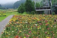 ユリが咲く高原へ - 季節の風を追いかけて