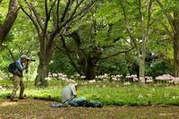 クイズです。夏に咲くこの花の名前はなんでしょうか(立川市、昭和記念公園) - 旅プラスの日記