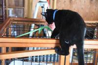 めざせ黒猫マスターへの道 その7 初受診 - りきの毎日
