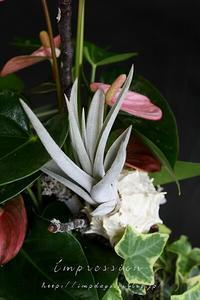 先週の定期装花から チランジア - Impression Days
