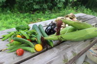 もうすぐ立秋:ハクビシンにやられました。 - 週刊「目指せ自然農で自給自足」