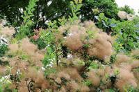 花の少ないフラワーパークで (2) - ぶらり散歩 ~四季折々フォト日記~