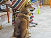 犬のしつけ方教室 8/4 - SUPER DOGS blog