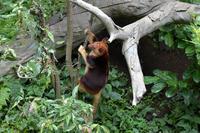 跳ねる若旦那 - 動物園へ行こう