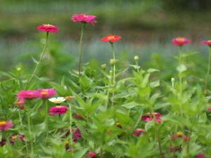 原っぱに咲く花 -