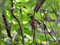 巣作り中 - 季節の映ろひ